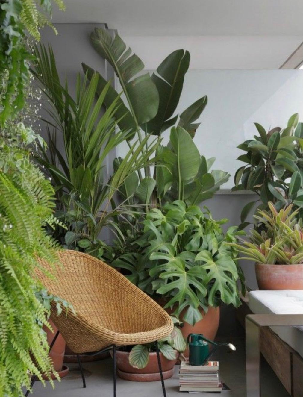 Pozvite k sebe domov interiérové rastliny.